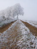 Frozen farm track — Stock Photo