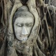 Buddha head in tree roots - Stock Photo