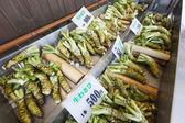 Fresh Wasabi Plants For Sale — Stock Photo