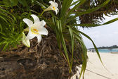 Lilies Growing off Rocks at Kabira Bay — Zdjęcie stockowe