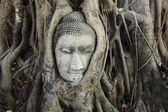 Buddha head in tree roots — Stock Photo