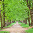 Avenue of Trees — Stock Photo #24911103
