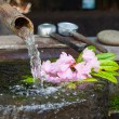 Stock Photo: Rhododendron flower floating in stone basin fed by bamboo pi