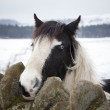 Horse in winter landscape — Stock Photo