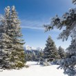 Snowy Fir Trees and Mountains — Stock Photo