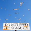 Stock Photo: Seagulls Fly Above Do Not Feed Seagulls Sign