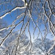 Snow covered branches — Stock fotografie