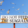 Seagulls Fly Above Do Not Feed Seagulls Sign — Stock Photo