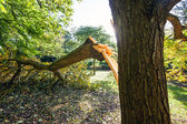 Tree Damaged During UK Storm — Stock Photo