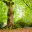 Tree Trunk in Woodland — Stockfoto