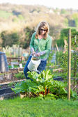 Woman Watering Allotment — Stock Photo
