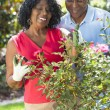 Senior African American Man Woman Couple Gardening — Stock Photo