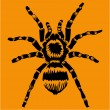 Stock Vector: Tarantula