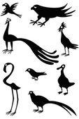 Funny birds — Stock Vector