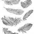 Feathers — Image vectorielle