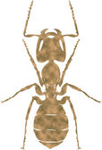 Illustration of ant — Stock Photo