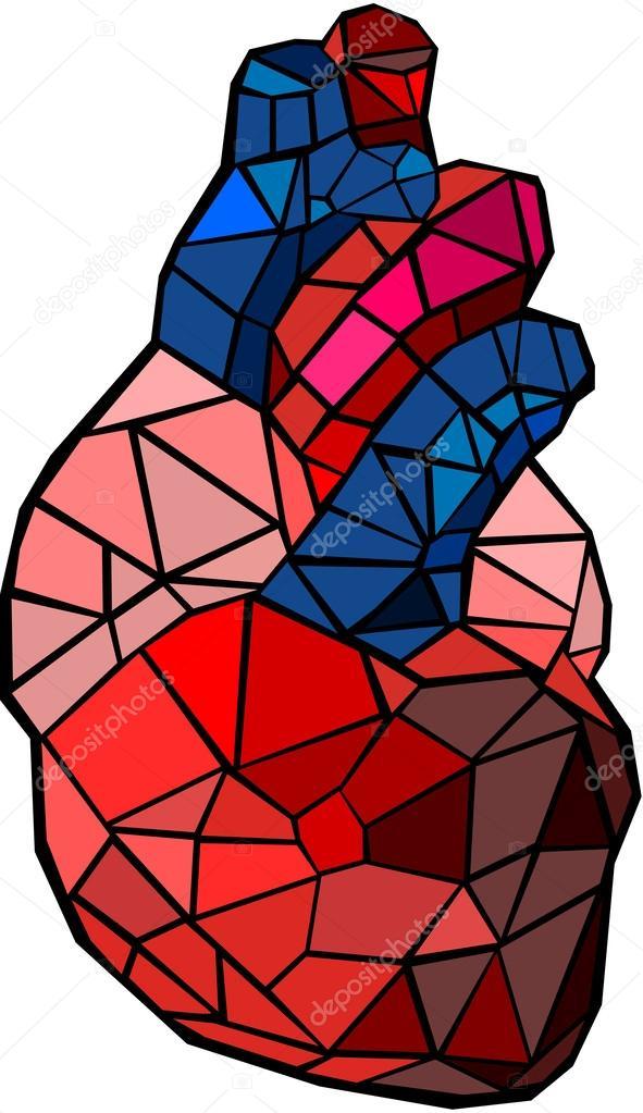 Vector heart human