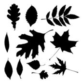 Vector silhouettes of autumn leaves — Stock Vector