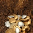 Gold Pebble contemplkation of richness — Stock Photo
