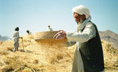 Afghan Peasant — Stock Photo