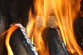 Flame from odorous trunk — Stock Photo