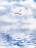 White Dove of the water — Stock Photo