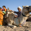 Camels Of The Beduins — Foto Stock