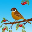 Sparrow sitting on a branch of ripe rowan — Stock Vector