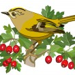 Goldcrest bird and hawthorn - Stock Vector