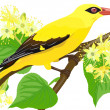 Royalty-Free Stock Imagem Vetorial: Golden Oriole bird