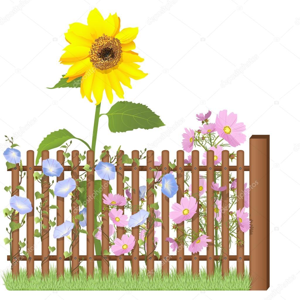 木栅栏和向日葵, 科斯梅亚