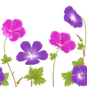 Geranium flowers pattern — Stock Photo