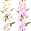 Digitalis flowers — Wektor stockowy #34996107