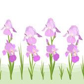 Iris flowers pattern — Stock Vector