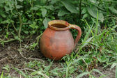 Pitcher in the garden — Foto Stock