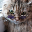Clever puss in glasses — Stock Photo