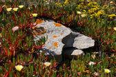 Der stein mit flechten — Stockfoto