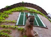 The house with a horse — Stock Photo