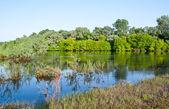 El prado de agua — Foto de Stock