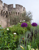 The flowers of Avignon — Stock Photo