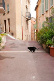 The walking cat — Stock Photo