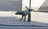 The dog — Stok fotoğraf