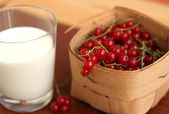 Red currant in a basket and milk — Stock Photo
