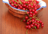Close up red currant — Stock Photo