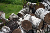 Birch logs piled up on green — Stock Photo