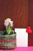 Light pink hyacinth and a love message — Stock Photo