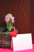 Light pink hyacinth and a love message — Zdjęcie stockowe