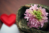 Light pink hyacinth and a love message — Stockfoto