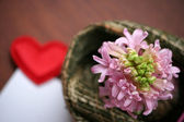 Light pink hyacinth and a love message — 图库照片