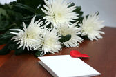 White flowers, bouquet of chrysanthemums — Foto de Stock